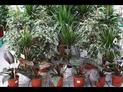 Большой садовый центр на 16-ой Парковой (Москва): комнатные растения