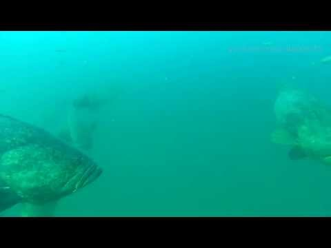 Fin Barge Goliath Grouper and snapper