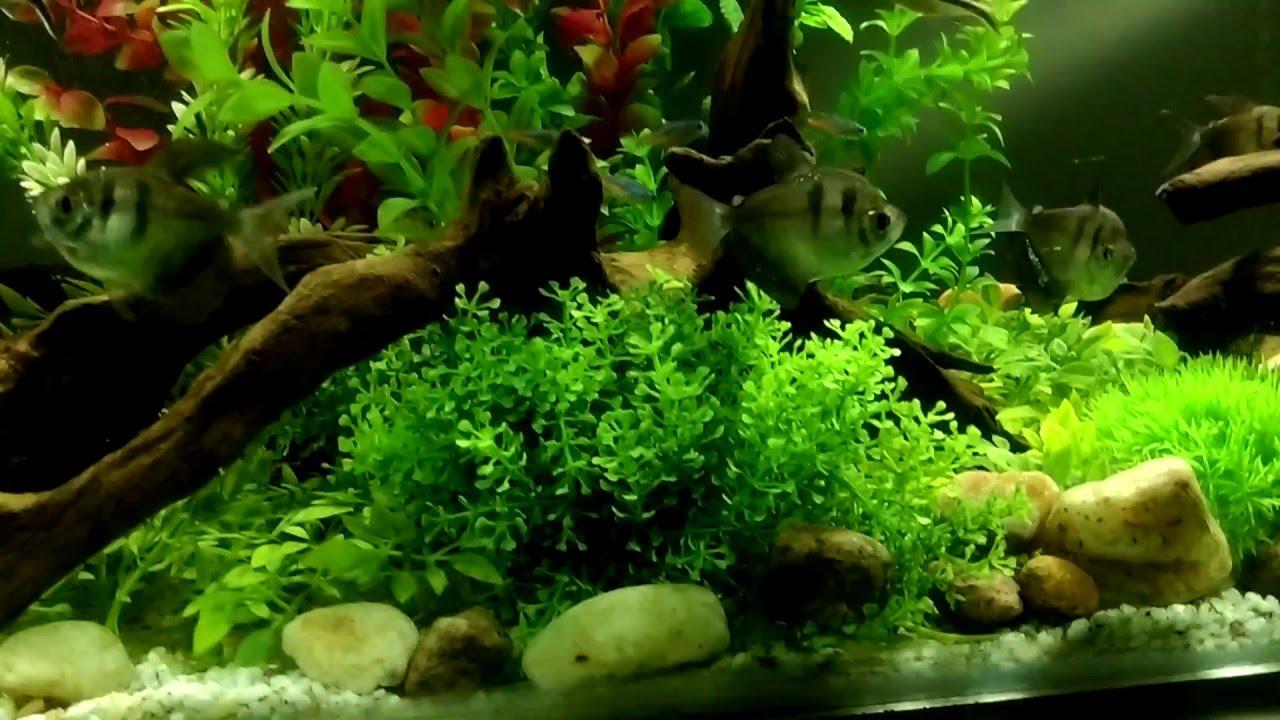 Aquarium with fake plants youtube for Fake artificial aquarium fish tank