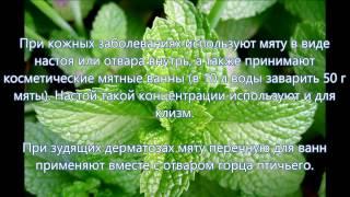 Лечение мятой перечной: настойка, рецепты применения и приготовления