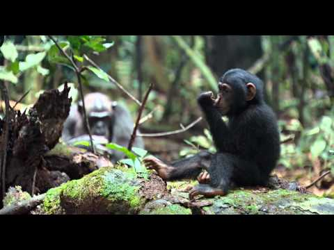 CHIMPANZEE - Swinging (clip) with Caro Emerald - That Man