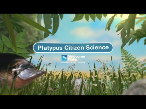 Platypus Citizen Science