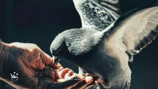 Lantunan Syair Zikir dan Takbir - Ust Gus Miftah ft Ust Abdul Somad