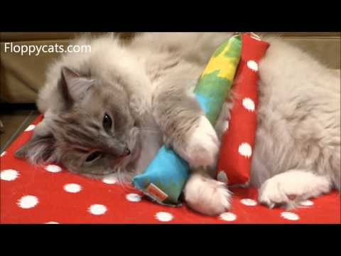 Peach Pet Provisions Catnip Kicks Cat Kicker Toy Product Review - ねこ - ラグドール - = ネコ - ねこ- Floppycats