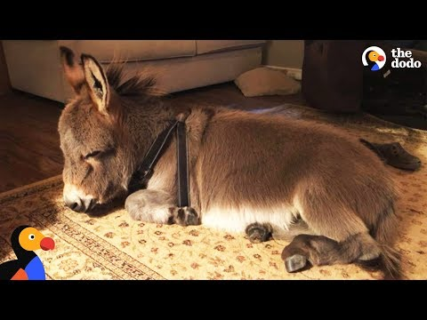 Donkey Dog Is Exploring His Pup Nature