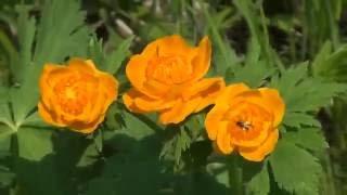 Казкова тайга, Поля квіток Жарков, Сибірської орхідеї, Риболовля,Про хота, Тайга, Гриби