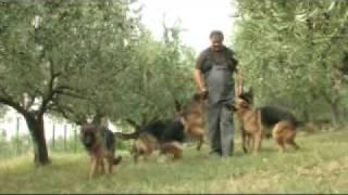 PSARNA IZOLAMAR - vzreja nemških ovčarjev - ODDAJA 4 .TAČKE