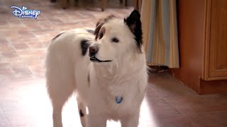 Dog With A Blog - Stan Has Puppies - Official Disney Channel UK HD