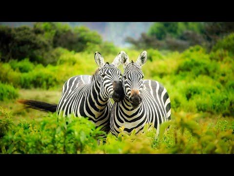 Kruger yoga nature sounds: Skukuza | African wildlife & animals noise, jungle sleep,latest sightings