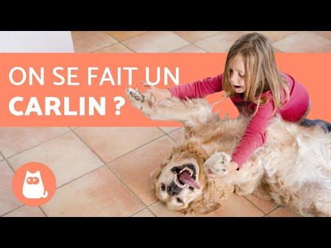 Chien A Donner - 10 astuces à savoir - Les bases de l'éducation canine - Rapidement