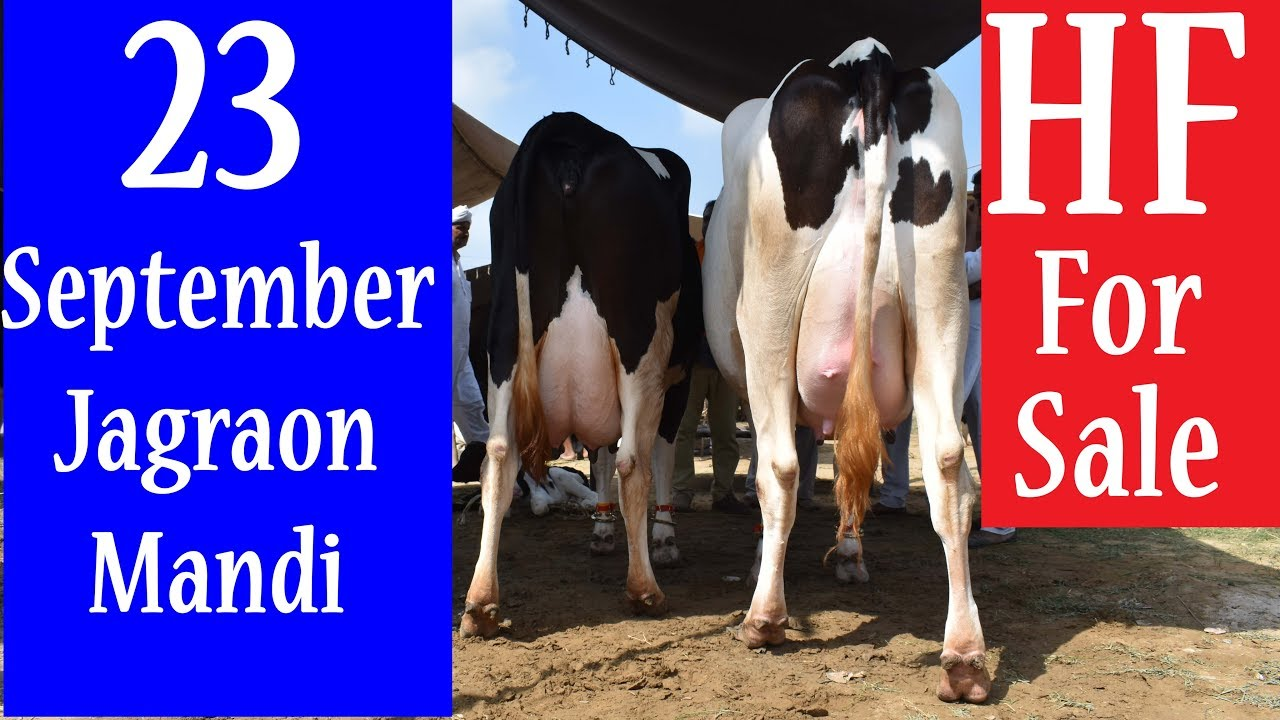 Jagraon Mandi 23 September 2019