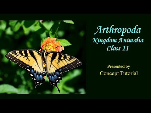 Kingdom Animalia (Part 8) Phylum Arthropoda | Hindi