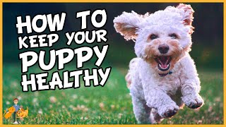 Essential Puppy Care: How to Keep a Puppy Healthy in 9 Simple Steps  Dog Health Vet Advice