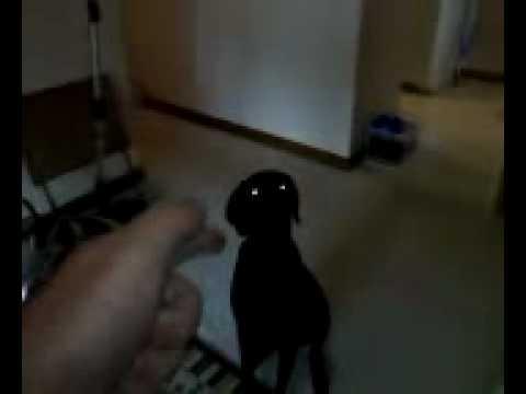 dog plays dead