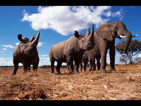 [Doku] Traumflug durch Afrika - Von Kapstadt bis Kenia (2/2) Vom Okavango zum Äquator [HD]