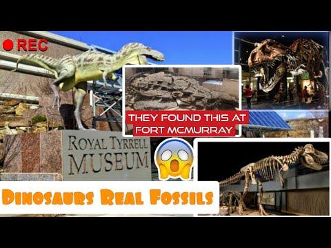 Royal Tyrrell Museum Full Tour || Real Fossils||Dinosaurs|| Paleonthology | Drumheller || Alberta