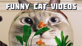 Cats funny Videos - Funny Cats - Cats Compilation 1 - Type of Cats