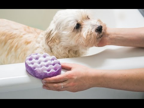 Dog Fashion Spa - Soap-Infused Spounges