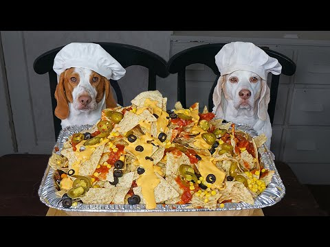 Chef Dog Makes Nachos: Funny Dogs Maymo & Potpie Cooking Nacho Recipe