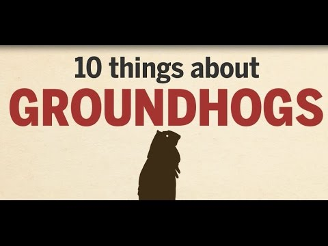 10 Things About Groundhogs   QMI Agency