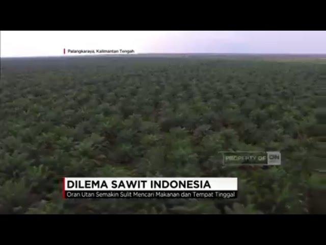 Dilema di Balik Perkebunan Sawit Indonesia