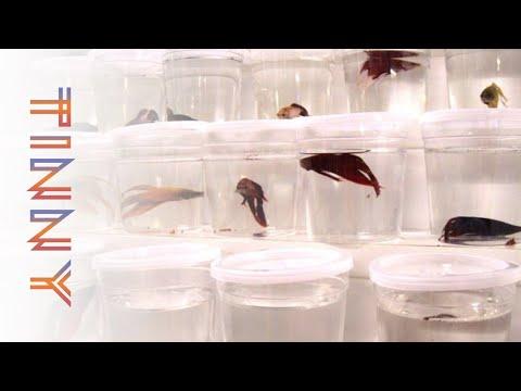 Walmart Fish Abuse?! The Story