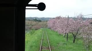 いすみ鉄道 ムーミン列車 (車窓から花見) 2018.4.6