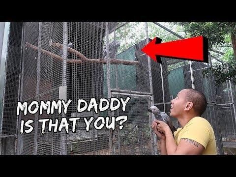 My Pet Baby Bird Meets Her Biological Parents | Vlog #248