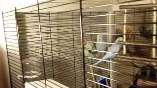 """Ферпласт Вольер для птиц Hemmy деревянный.Волнистый попугай """"Чех"""""""