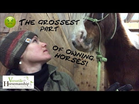 The Grossest Part Of Owning Horses... Sheath Cleaning! // Versatile Horsemanship