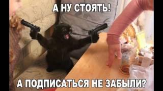 Funny Photo. Прикольные фото сборник №1