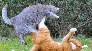 КОШАЧЬИ ЗАБАВЫ / CAT FUN