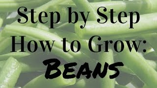 How to Grow Bush & Pole Beans - Complete Growing Guide