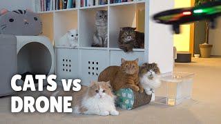 Cats Vs Drone