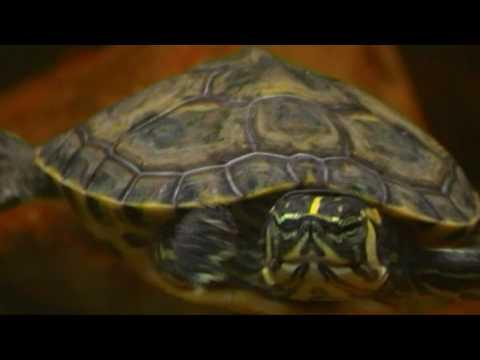 Acquario d 39 acqua dolce per tartarughe 150 l appena ter for Acquario esterno per tartarughe