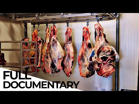 The Future of Food: In-Vitro Meat | Vegan Meat Lobby | ENDEVR Documentary