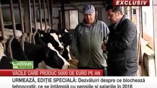 Ferma de familie unde fiecare vaca aduce un profit de 5.000 de euro