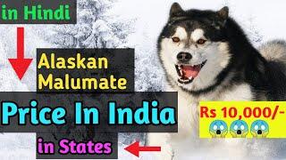Alaskan Malumate Price in India   Alaskan Malumate price in Hindi   How to import dogs form foreign