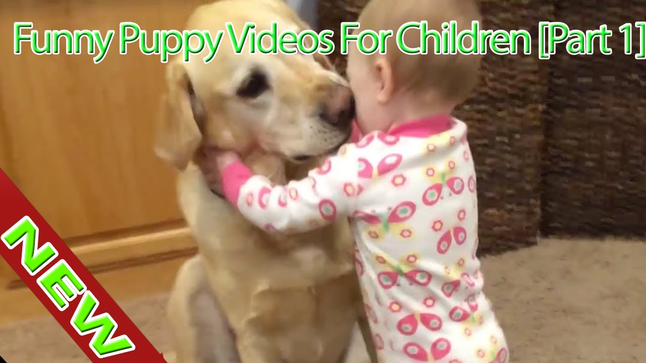 Uncategorized Funny Videos Children funny dog videos for children 2016 puppy part 1 edit hd and cat tv