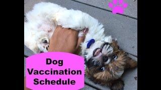 Dog Vaccine Schedule