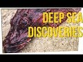 Deep Sea Fisherman Shares Crazy Discoveries ft. Boze & David So