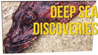 Deep Sea Fisherman Shares Crazy Discoveries ft. Boze & David So