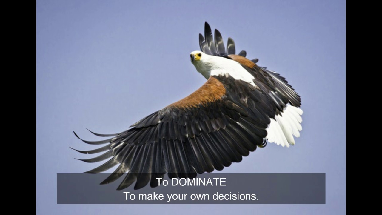 You Can't Soar Like An Eagle When You Surround Yourself With Turkeys     Great Motivational Video