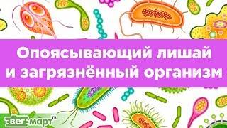 Опоясывающий лишай и Загрязнённый организм. Какая связь? Михаил Советов