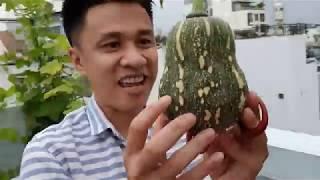 Thu hoạch 1 tấn rau trên sân thượng