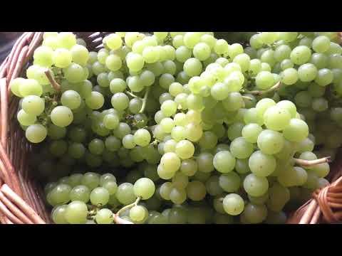 Игристое вино из винограда в домашних условиях простой рецепт