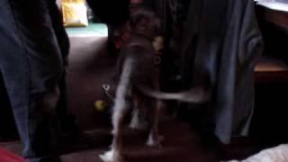 Meg At Home - Terrier-lurcher Cross - Needs A Home! Rspca Macclesfield