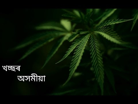 Ganja baby 'Marijuana' (Full HD & corrected lyrics)