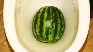 Will it Flush? Watermelon