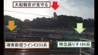 大船駅に到着する引退間近の特急踊り子185系や発着する東海道本線と湘南新宿ラインの列車